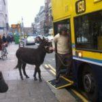 Funny Irish Photos