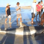 Western Australia 12-Foot Tiger Shark Accidentally Caught At Beach