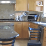 A Family Put A Hidden Camera In Their Kitchen. What Their Dog Got Up To Is Just Amazing
