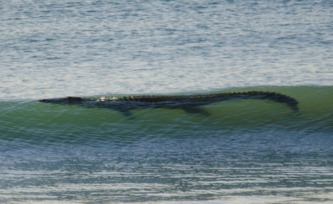 13-Foot Crocodile Shuts Down Western Australia Beach