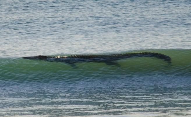 13-Foot Crocodile Shuts Down Western Australia Beach