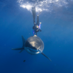 This Girl Snatches Fin Of A Giant Shark. What Happens Next Shocked Me.