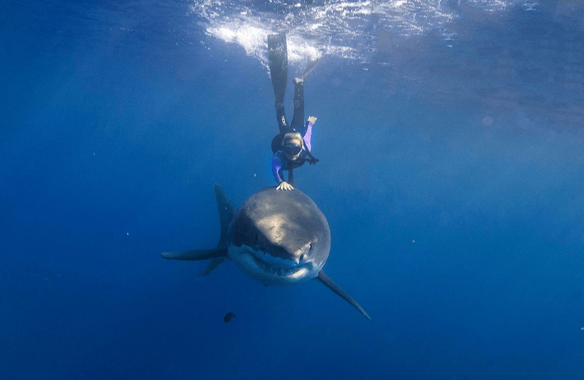 Crazy video of a girl swimming with a shark