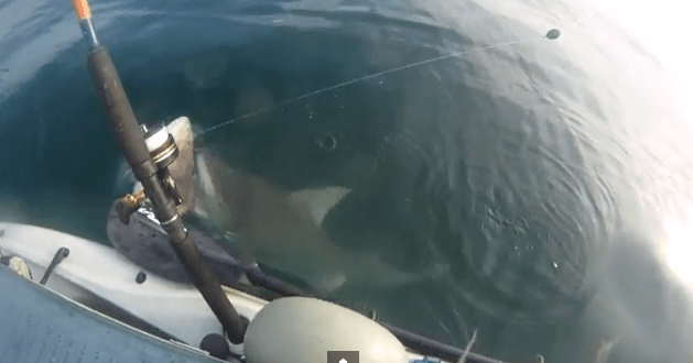 Kayaker gets a surprise visit from a shark YouTube