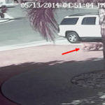 Video captures family cat saving boy from dog attack