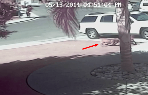 VIDEO Cat saves Bakersfield boy YouTube